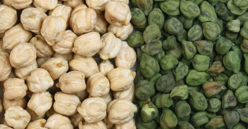 Como realizar o cultivo de grão de bico: da semeadura à colheita