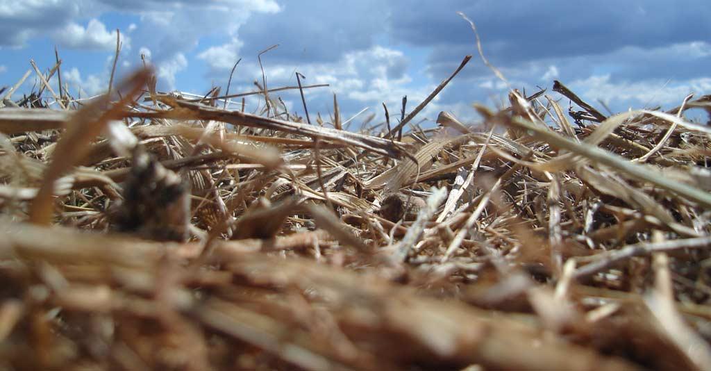 Sistema Plantio Direto na Palha