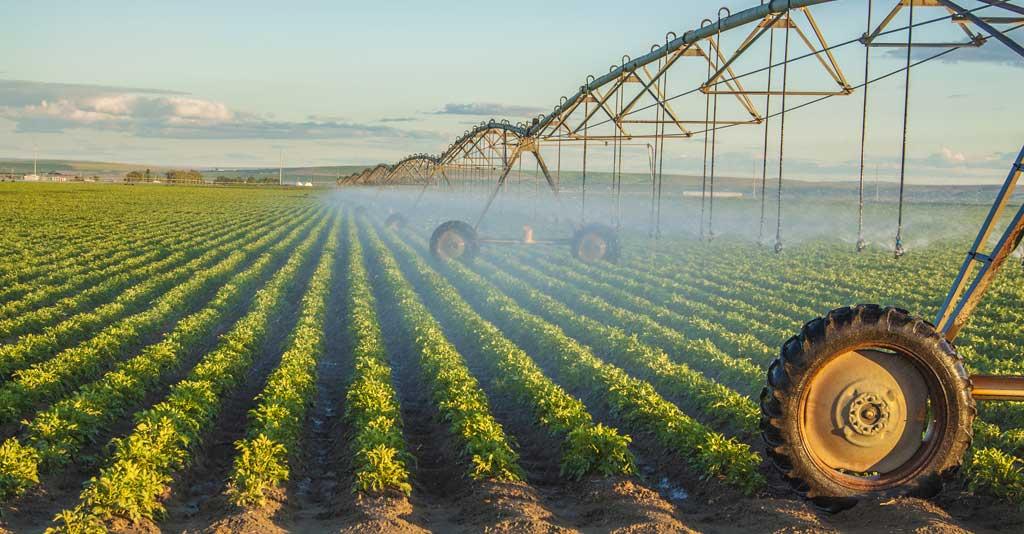 Irrigação: sistemas e dicas para um manejo adequado