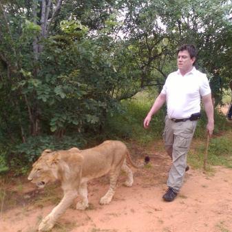 Colaborando en el Proyecto de Reintroducción de Leones en Áreas Protegidas , en África Central