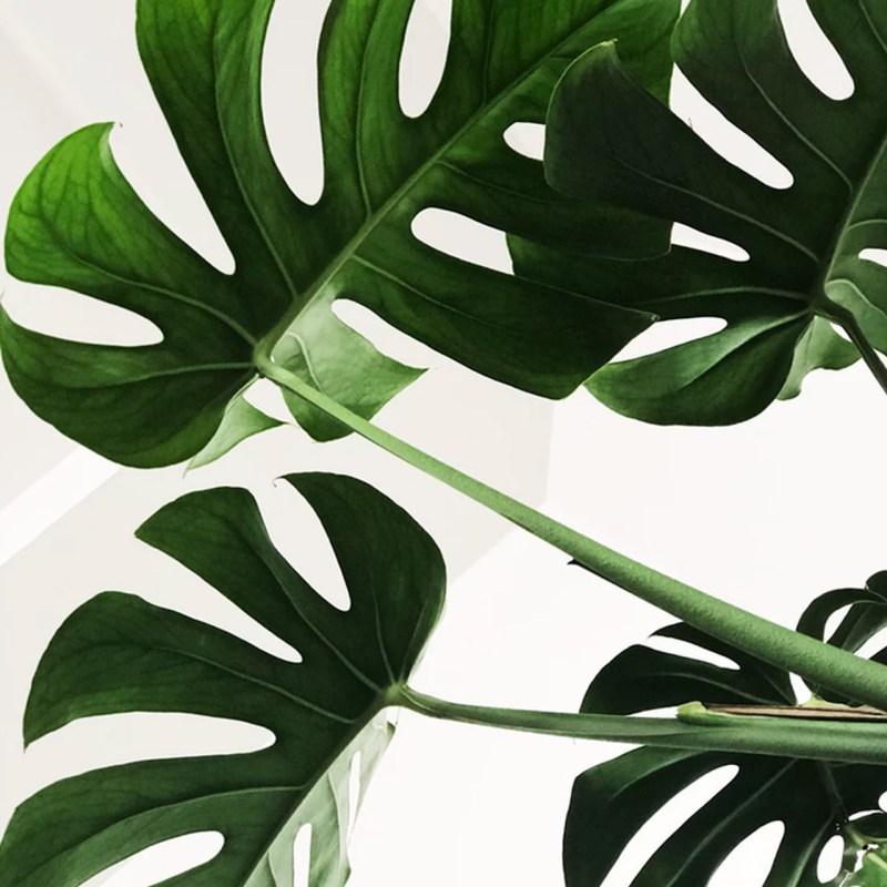 Plantas que ayudan a purificar el ambiente de tu casa