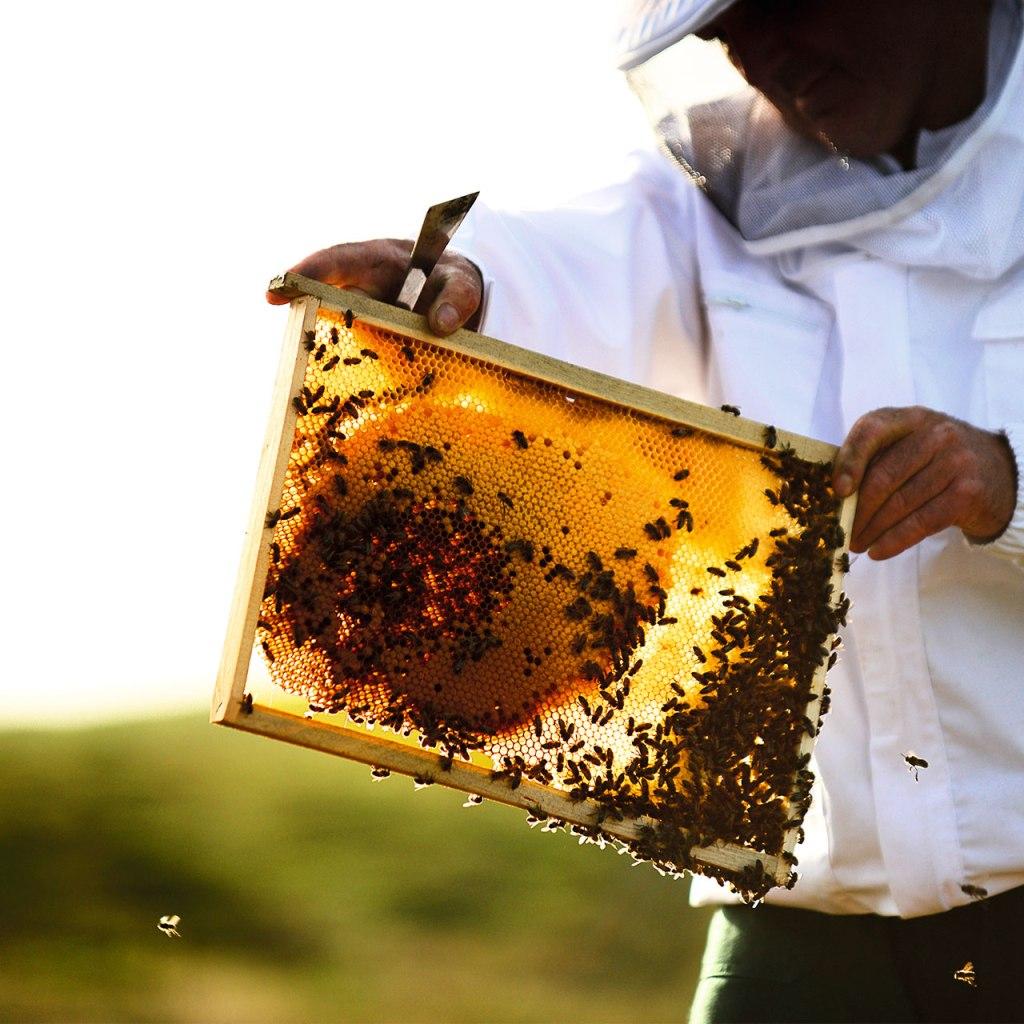 Estas marcas de beauty contienen miel de abeja y además, las protegen