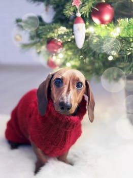 what christmas treats pets need to avoid eating