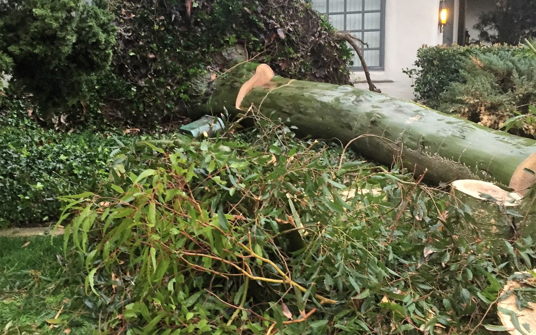 Storm damage Valencia | Insurance SCV | Carol Smith