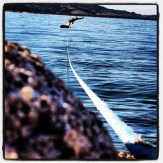 Log boom mooring for boats out into Folsom Lake.