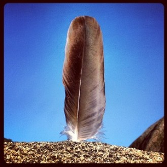 Hawk feather in granite rock