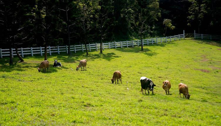 Ранчо Летающей Коровы