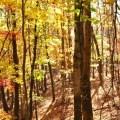 Autumn Bates Method Asheville Vision Improvement