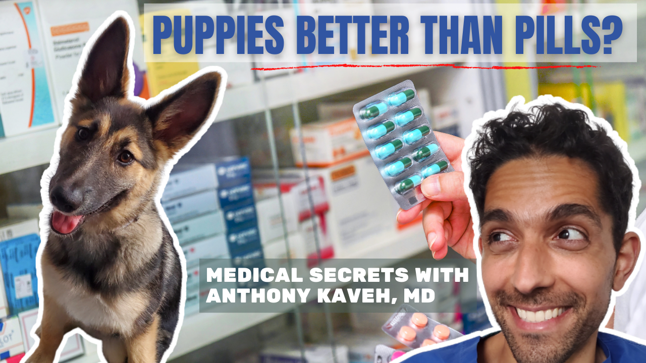 alternative medicine can be powerful, especially when it involves dogs! learn how dogs can be more powerful than pills!