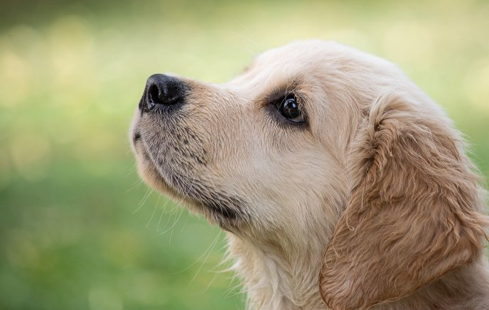 puppies and dogs can be as effective as many medications for cardiovascular health! learn more from Dr. Kaveh!