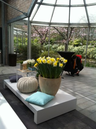 Daffodils and that knitted pouffe again