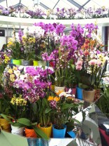 Central orchid display. Note the ring of orchids surrounding the central hall.