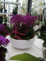 Bowl with a collection of dark pink orchids