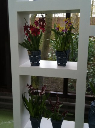 Various orchids in pot covers made from recycled jeans