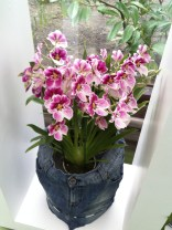 Pink and white orchids in pot cover made from recycled jeans