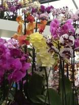 Orchid display at the Keukenhof