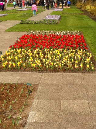 Kaufmanii tulips at the Keukenhof