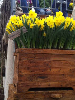 Daffodils, Keukenhof