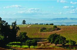 Landscape view of central California winery with IWS-engineered wastewater treatment