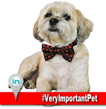 Very Important Pet IN11 Selfie WEB