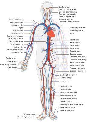 Functional Medicine Doctor Boca Raton