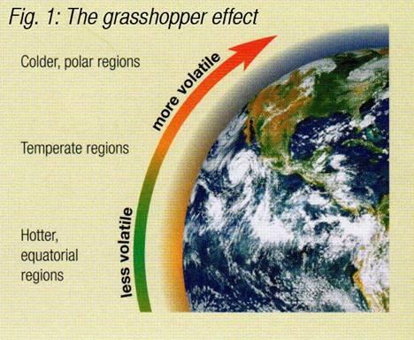 grasshoppereffect