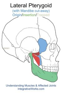 oit-lateral-pterygoid-lateral-view