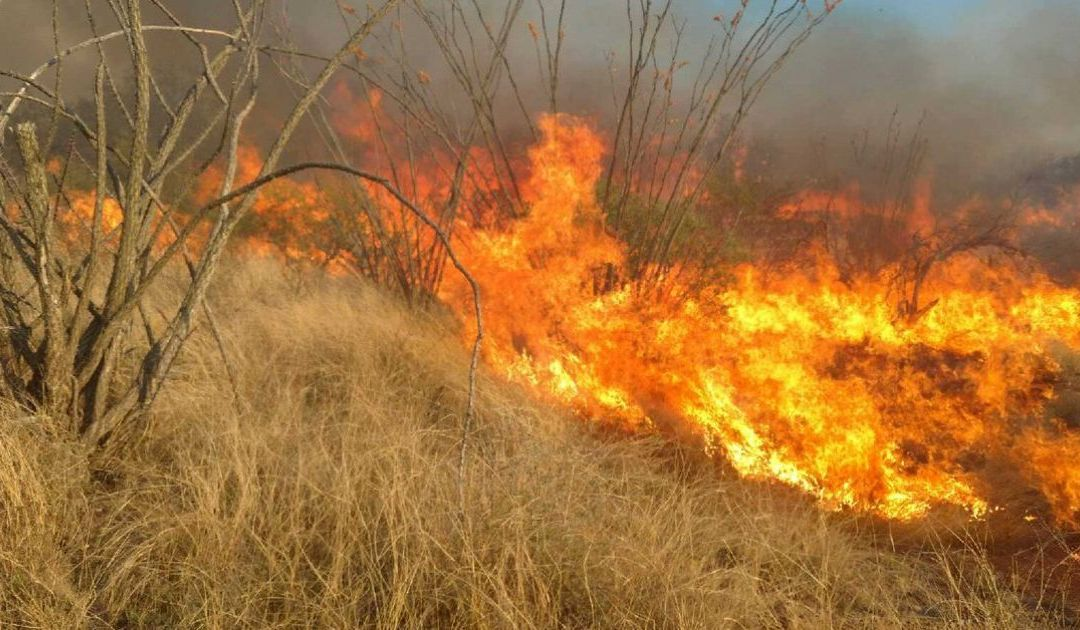 10 things to know about Sawmill and Cactus fires