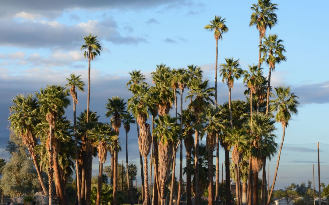 Phoenix's urban forest is shrinking — and residents say it's time to change that
