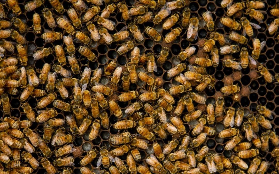 Swarming bees stung 3people multiple timesin a motel in Phoenix
