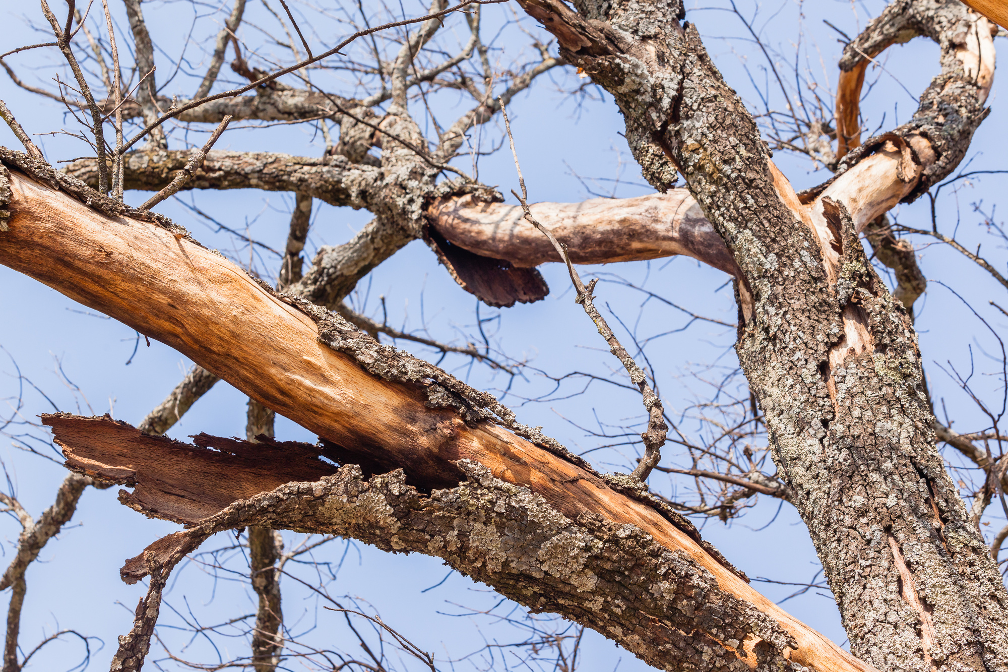 10 Signs of a Dying Tree You Shouldn't Ignore