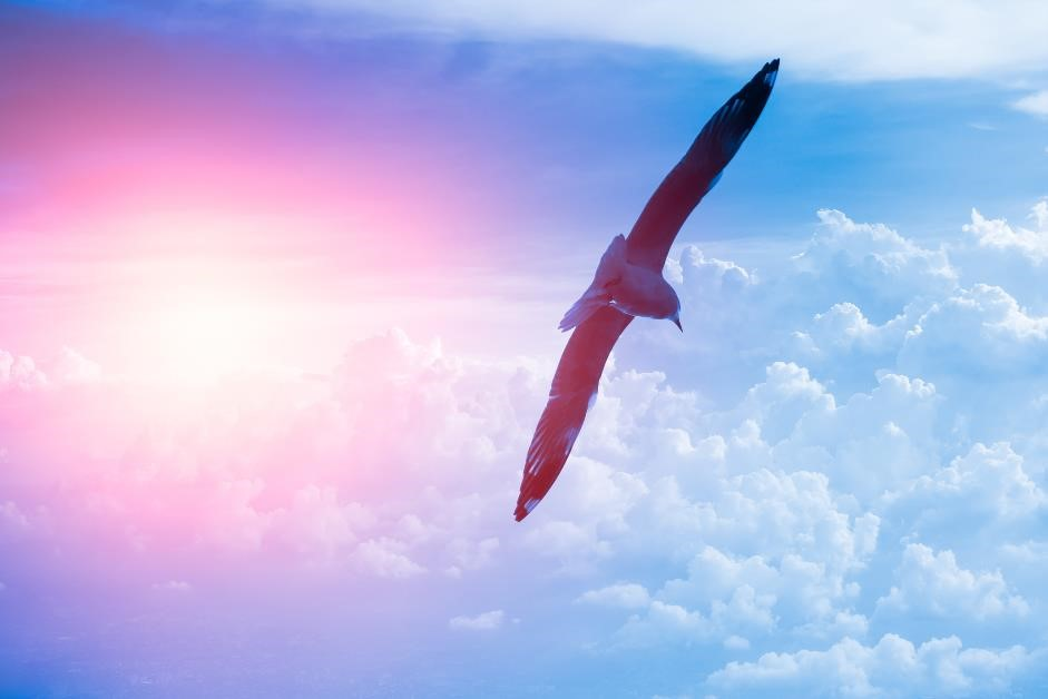 Bird flying on the wing clouds and sky