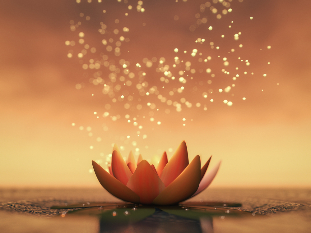 Lotus blossom flower on shimmering water with white seeds floating up.