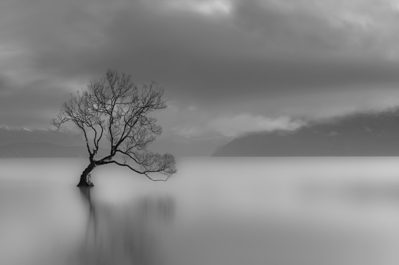 The Lone Tree in Wanaka - iconic black and white image, moody and stormy background.