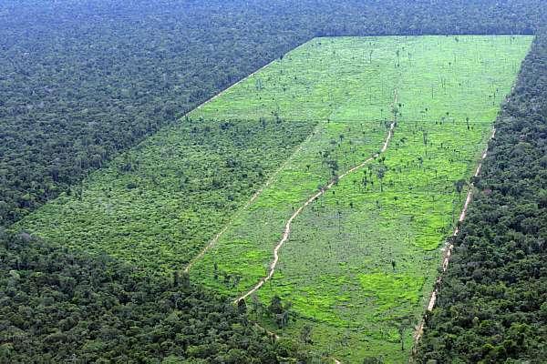 04_06_22_tecnologia_Amazonia