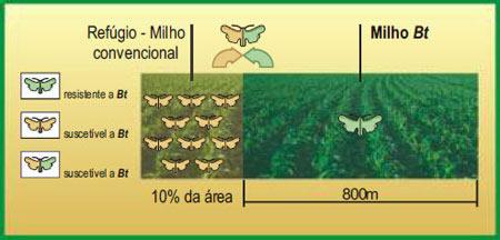 Biotecnologia-Refugio-Milho-Bt-Convencional