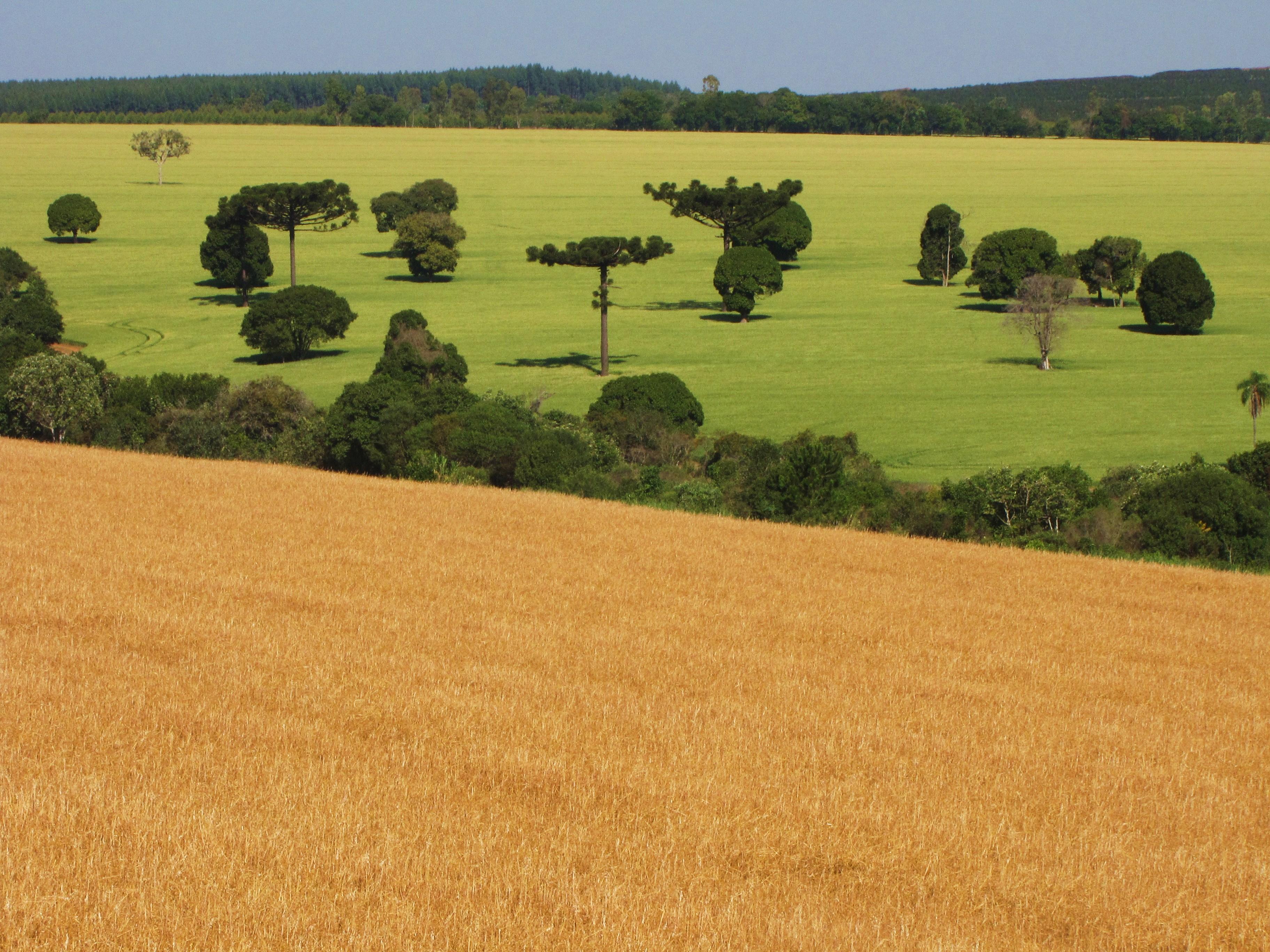 Entenda a formação do preço de terras no Brasil – parâmetros de influência e referências