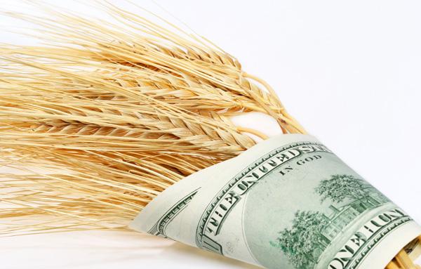 Como organizar as finanças de sua propriedade rural