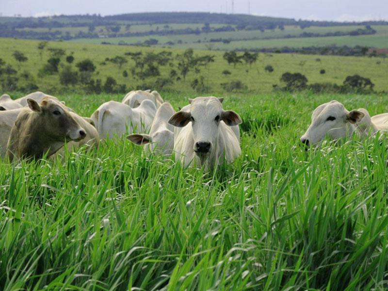 Pastejo rotacionado: O que é importante saber?
