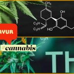 Cannabis – Comparing Ayurvedic and Allopathic understandings