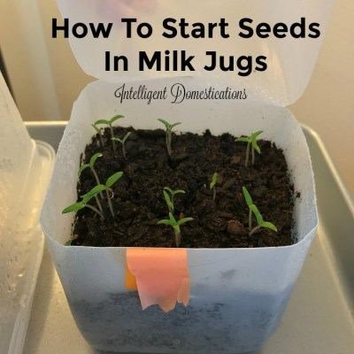How To Use Milk Jugs For Winter Seed Sowing