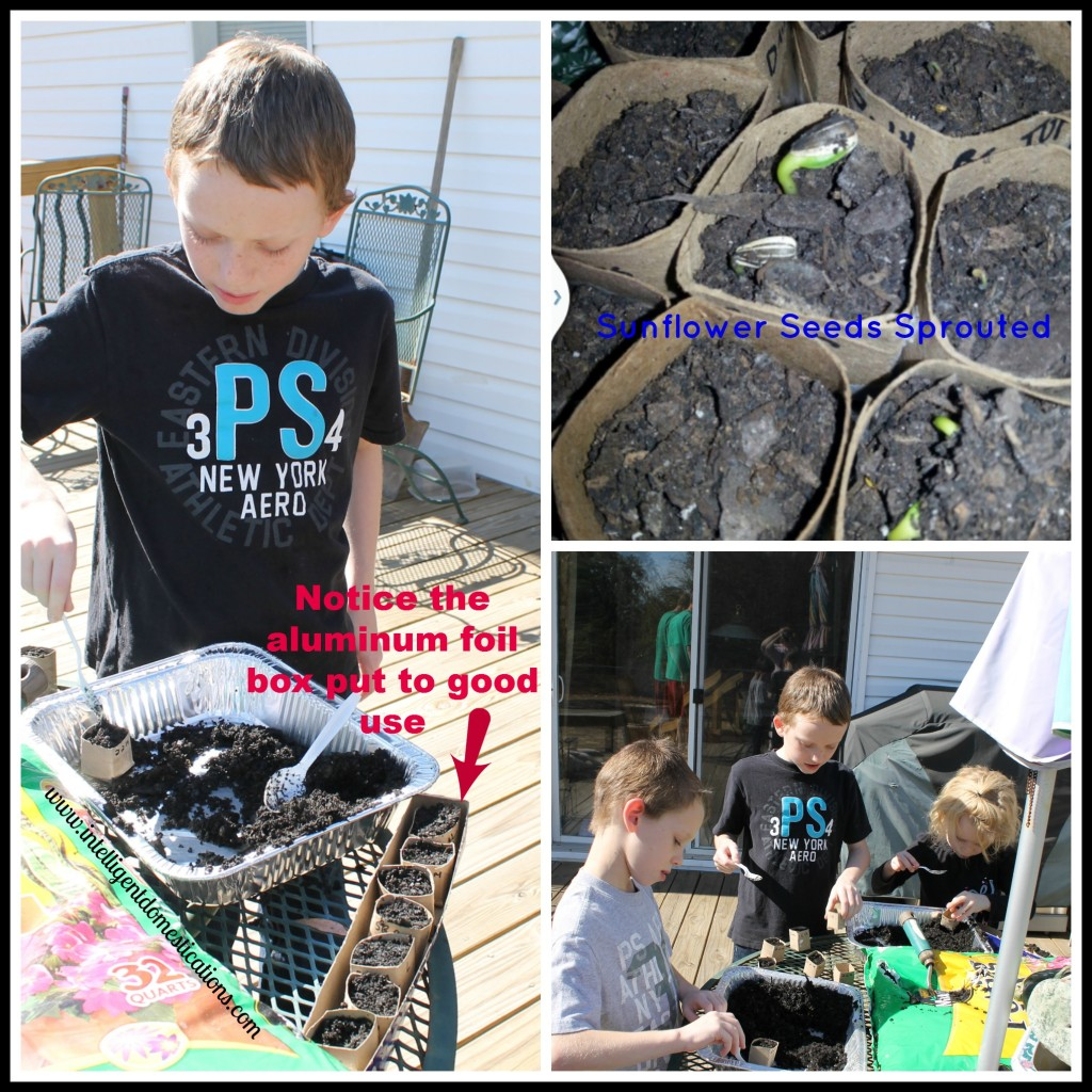 Wwinter Seed Sowing in Faux Peat Pots by Intelligentdomestications.com