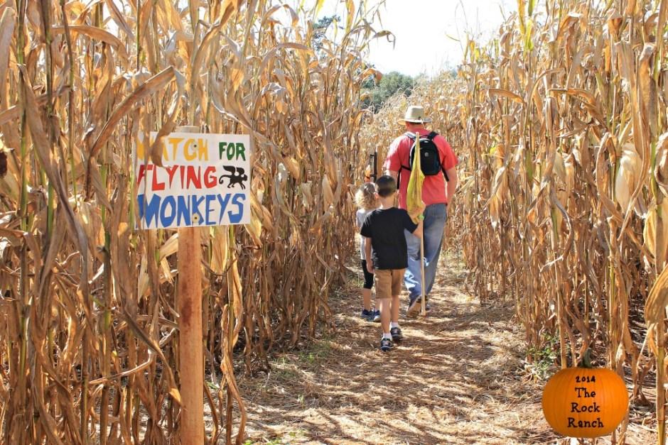 Corn Maze at The Rock Ranch in Georgia