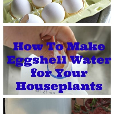 How to Make Eggshell Water For Houseplants
