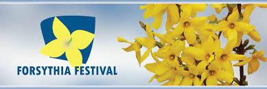 Forsythia Festival
