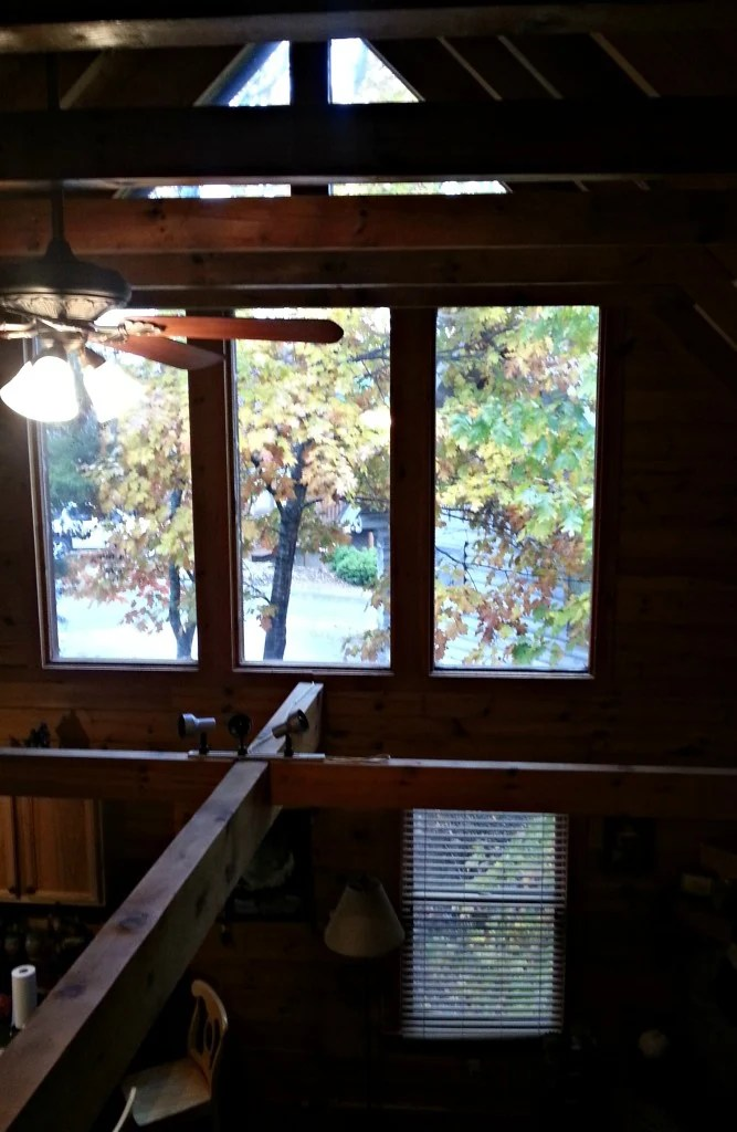 Dakota Lodge window wall with huge Maple tree filtering light and providing the view