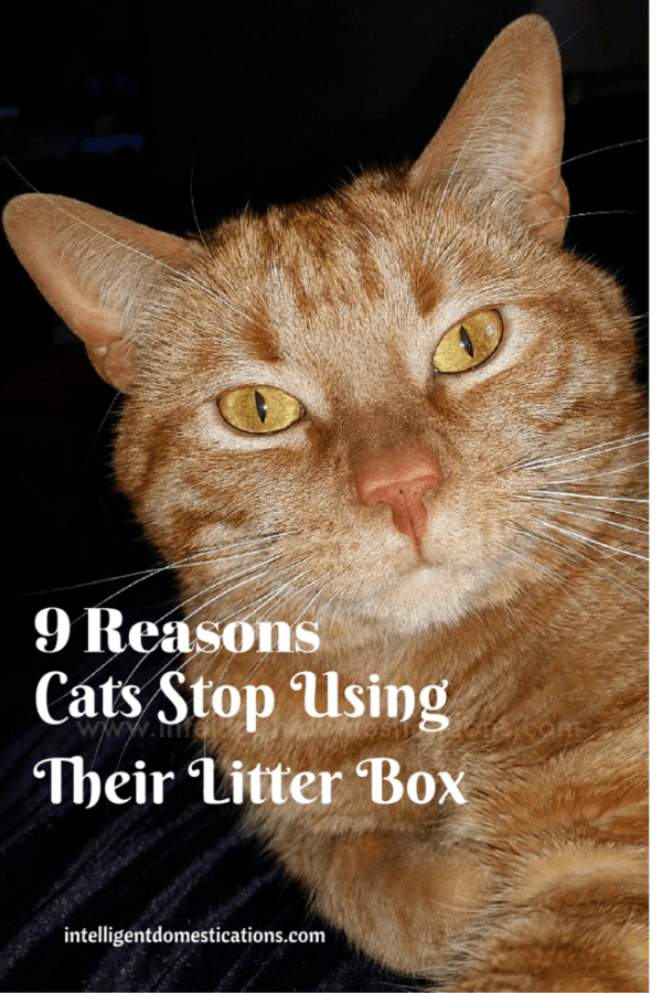 9 Reasons Cats Stop Using Their Litter Box. There are a few good reasons cats will suddenly stop using their litter box and we can easily fix that problem if we know which one applies. #cats #litterbox