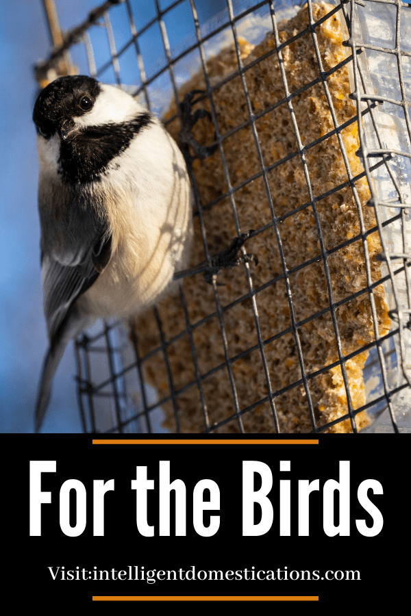 a chickadee perched on a suet feeder