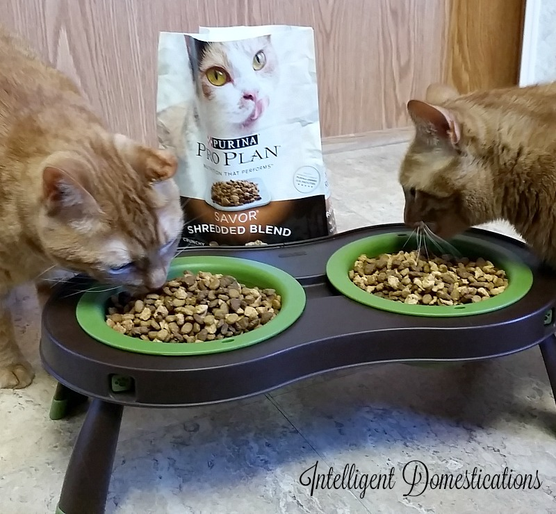 Heblee and Hoblee digging in to their new Purina Pro Plan Shredded Blend food.intelligentdomestications.com