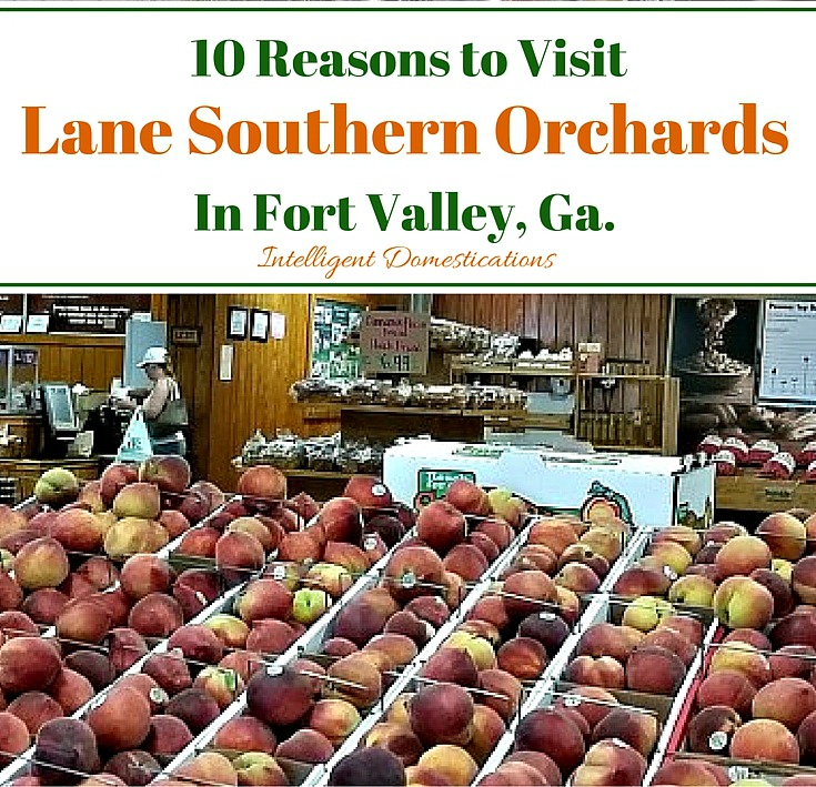 10 Reasons to Visit Lane Southern Orchards in Fort Valley, Georgia
